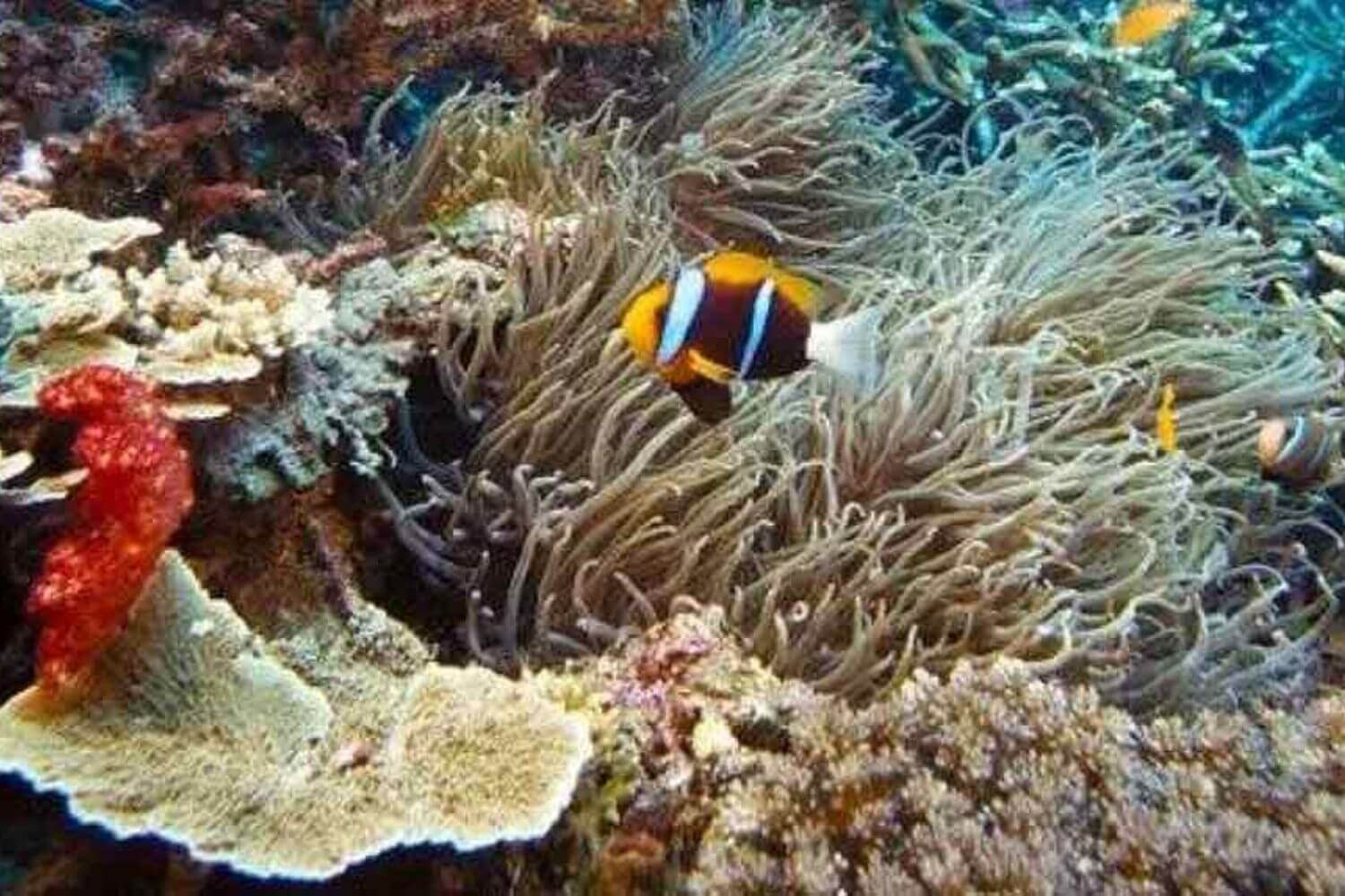 11Coral and fish in the Red Sea